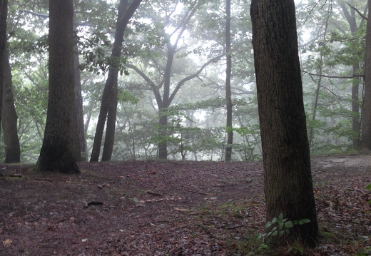 2014 07 10 brume dans l ascension du plateau de saclay